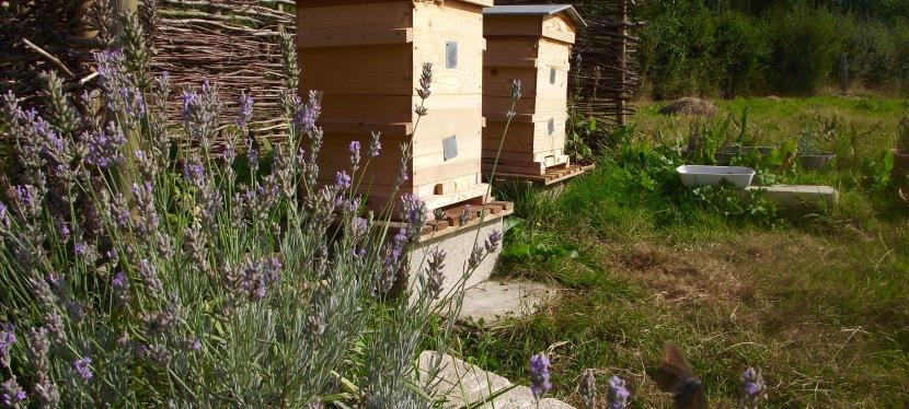 The Hive, Part Three: Epilogue/Prologue.