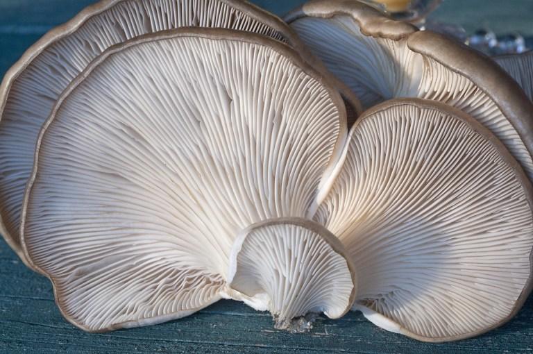 fungi-2069474_1920